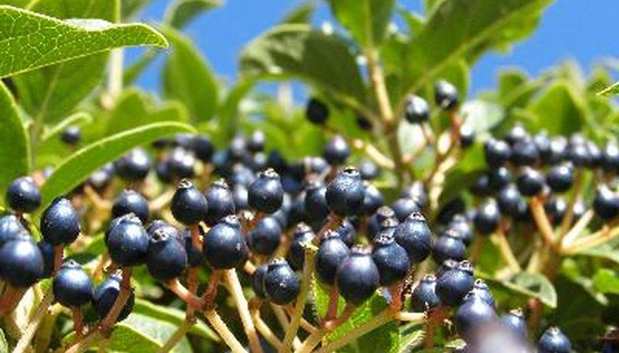 Las plantas se producen su propio alimento con procesos complejos en su interior.