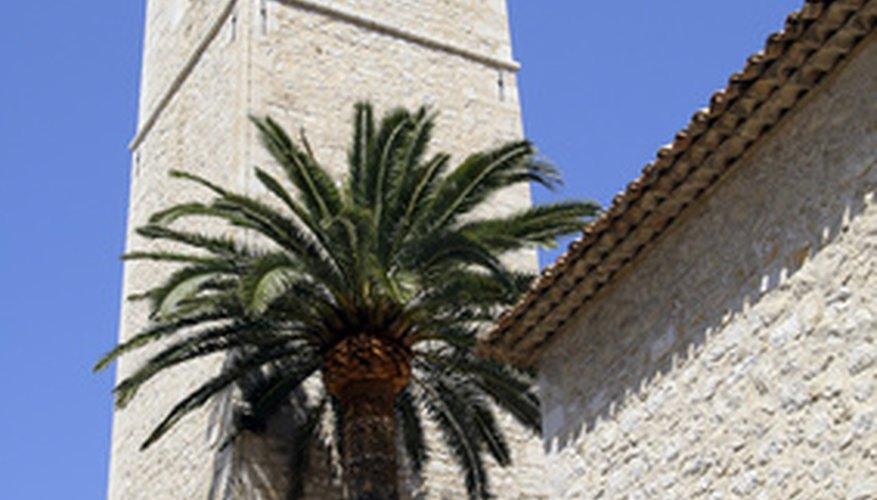 El árbol es el sujeto y se erguía en frente de la torre es el predicado completo.