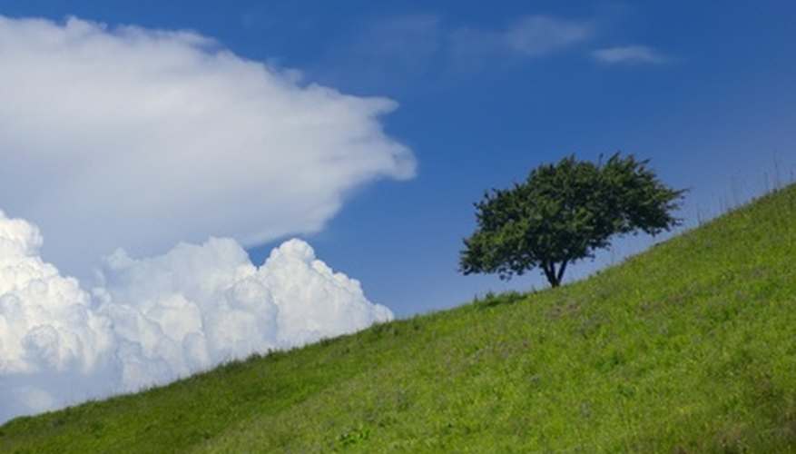 Tree on slope