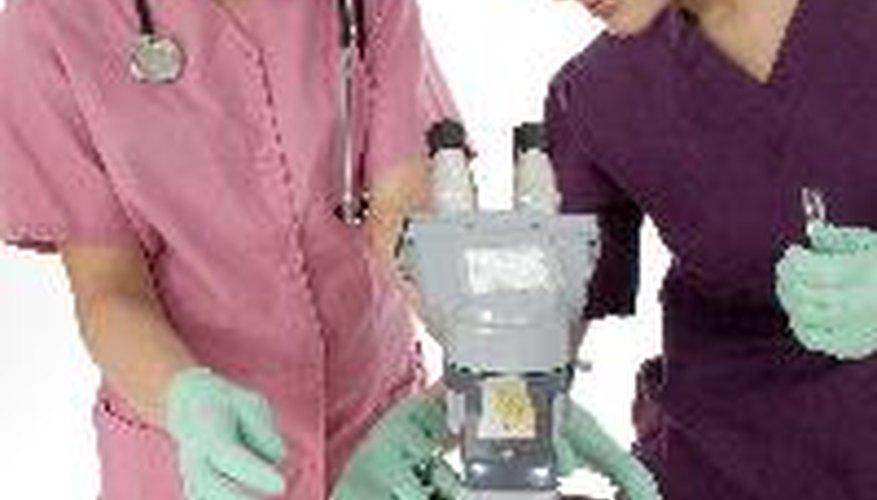 El estereomicroscopio, un instrumento de gran utilidad para la comunidad científica.