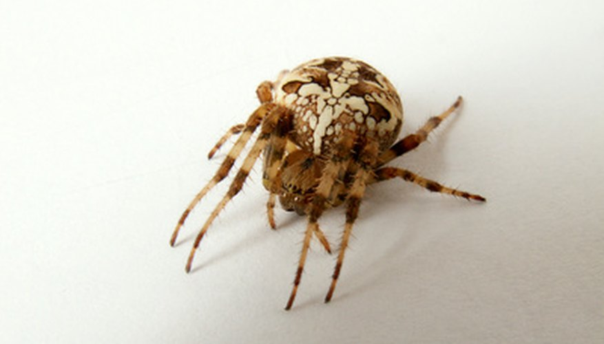 Connecticut has many common house spiders.