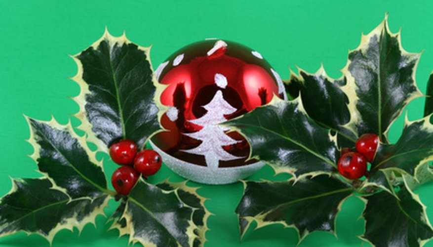 Green and red are traditional Christmas colors associated with holly.