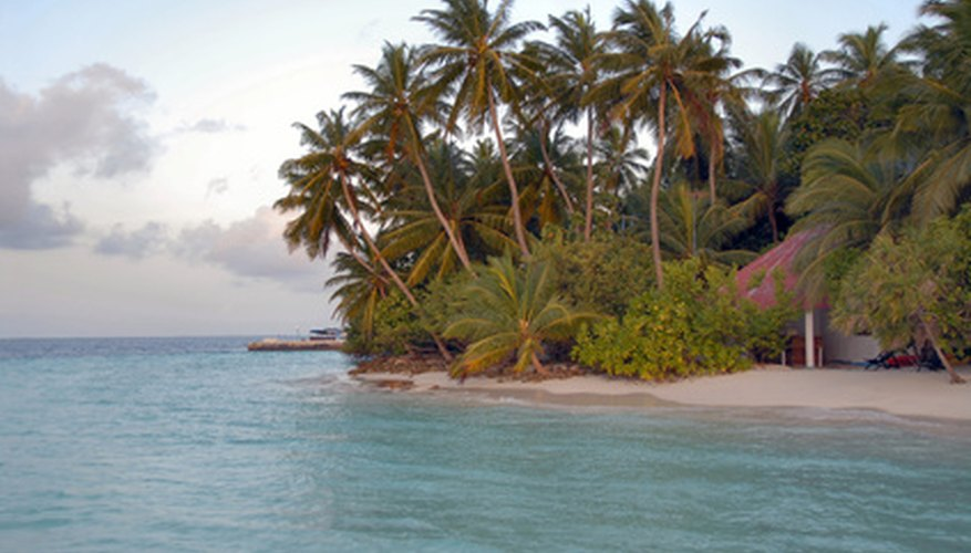 Coconut palms grow mainly in coastal areas.