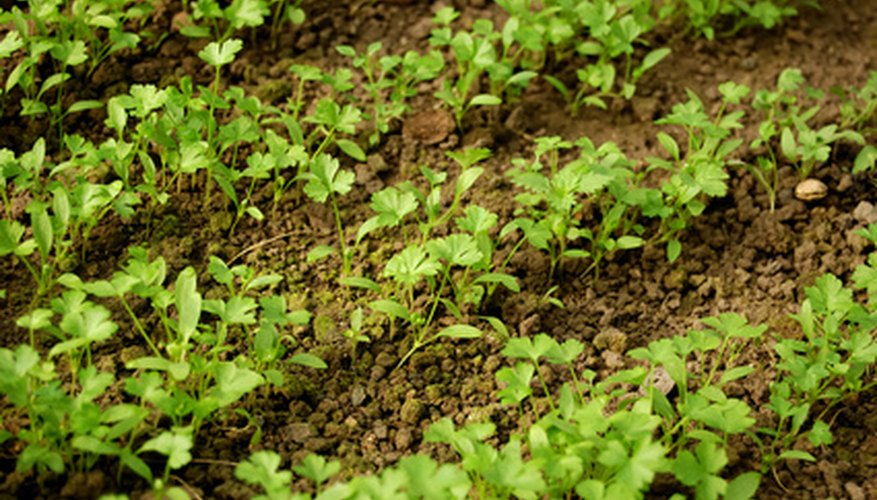 Healthy plants start with healthy soil.