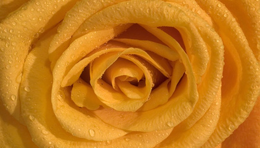 Roses are a traditional choice for casket blankets.