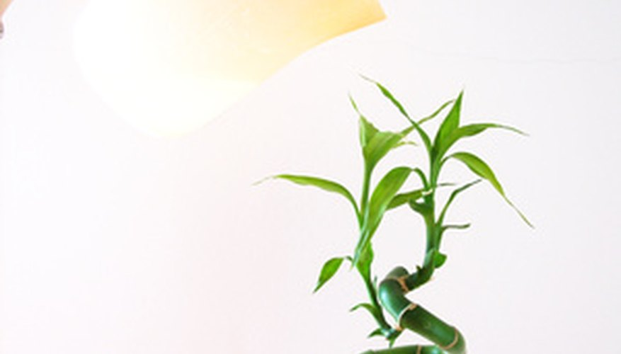 Indoor Bamboo Plant Allergic Reaction Information | Garden Guides