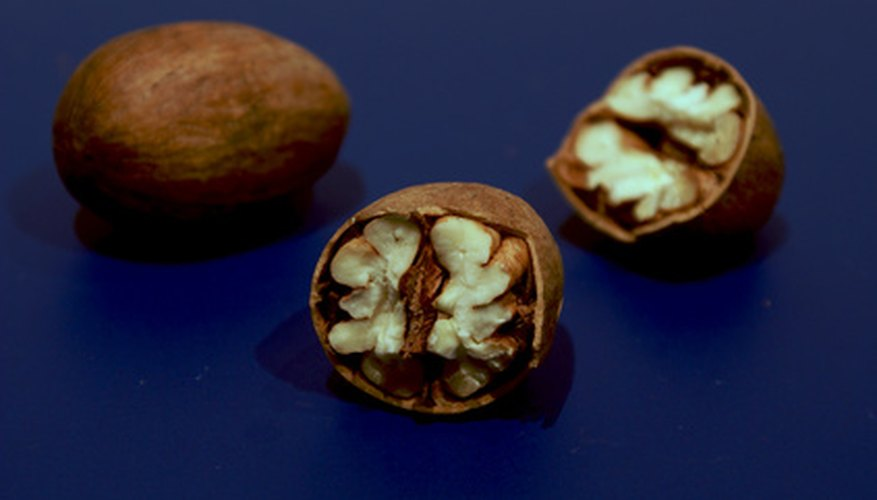 Pecan trees produce buttery flavored nuts made popular in pies.