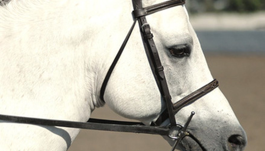 Los dientes de lobo pueden ser un poco dolorosos para el caballo.