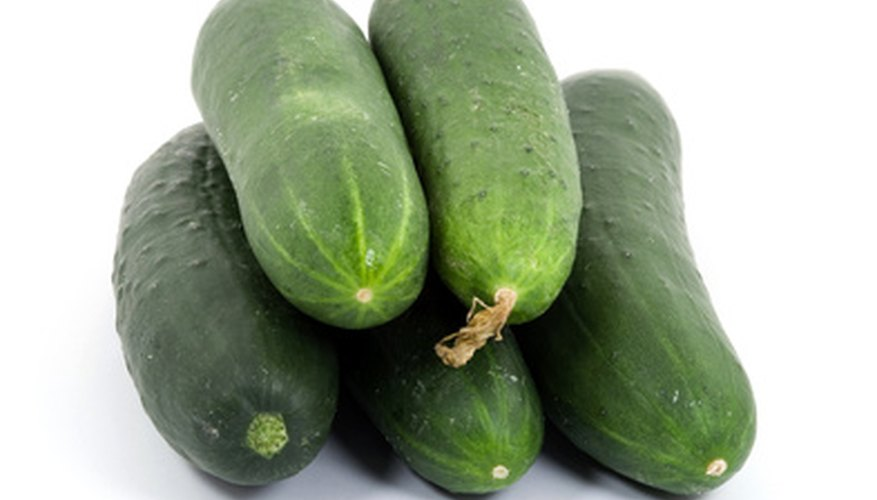Cucumbers need the nutrients from the water for the spreading parts of the plant.