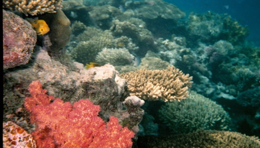 El coral natural puede ser costoso y no es personalizable.
