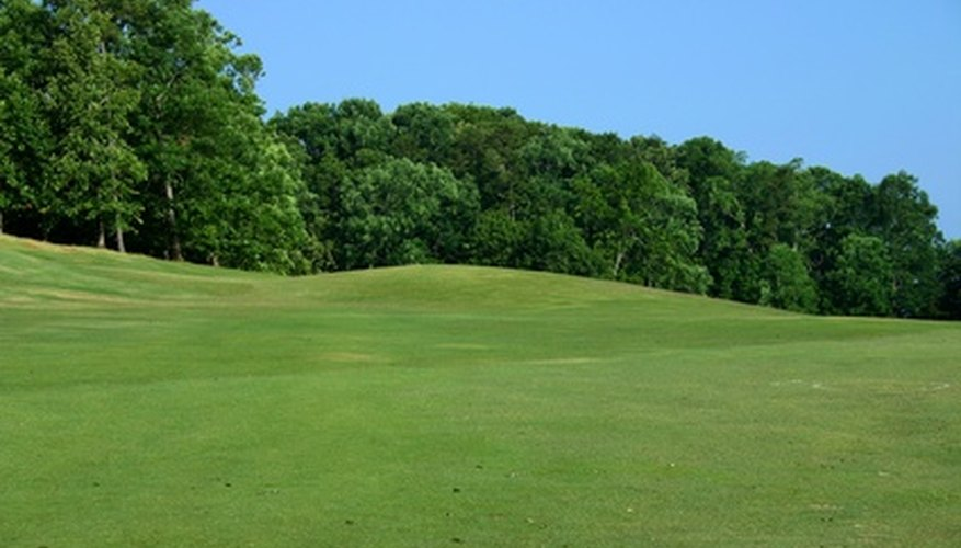 Bermuda grass is perfect for high-traffic areas such as golf courses.