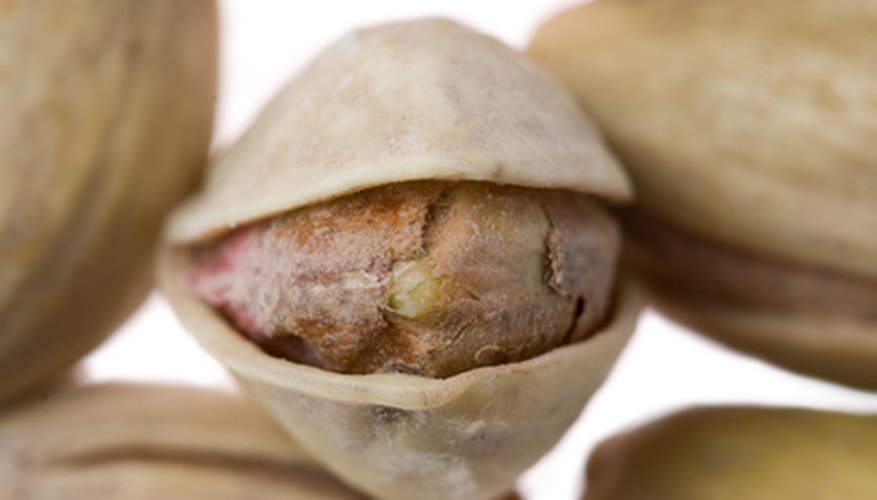 Pistachios are a popular nut due to their easy-to-peel shells.