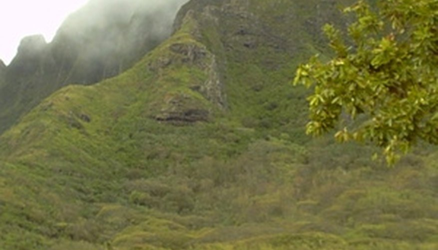 Tropical rainforests in Hawai'i can get  up to 400 inches of rain yearly