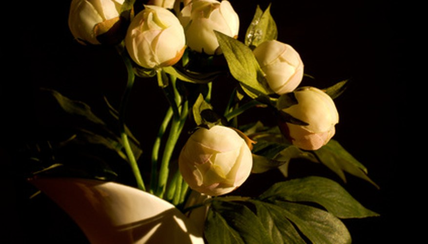 Cream-colored peony buds
