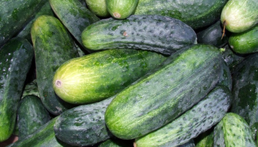 Cucumbers are easy to grow in pots on your porch or deck.