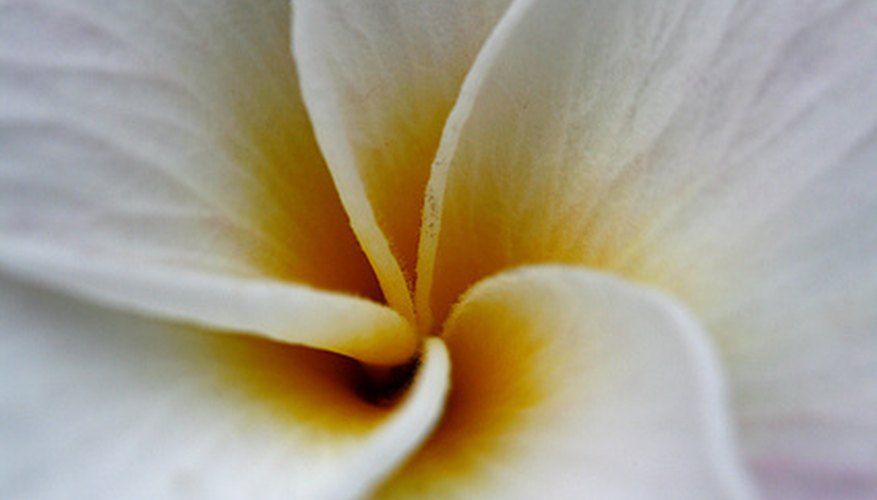 Names Of Hawaiian Tropical Flowers Garden Guides