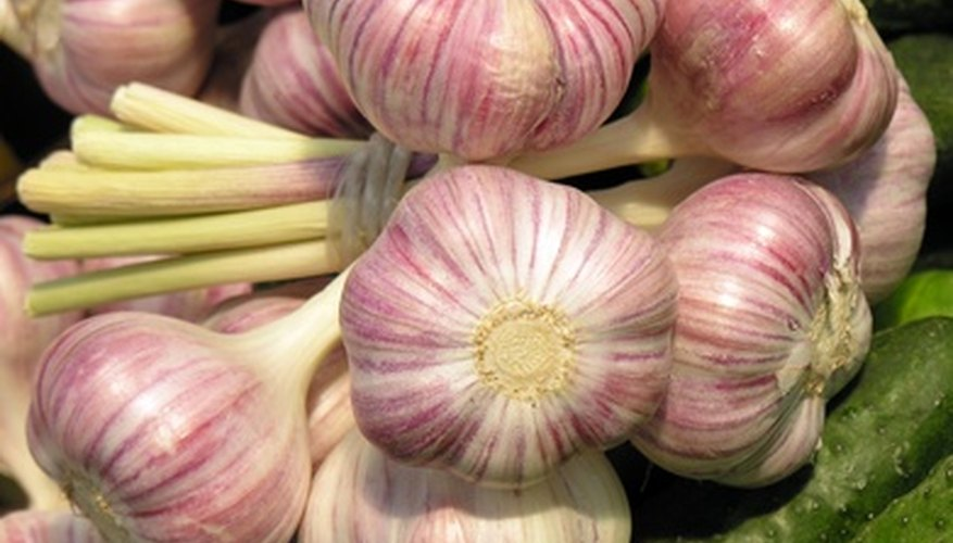Home grown garlic has a fresher, stronger taste.