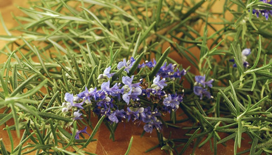 Dry, heat loving herbs such as rosemary do well in zone 9