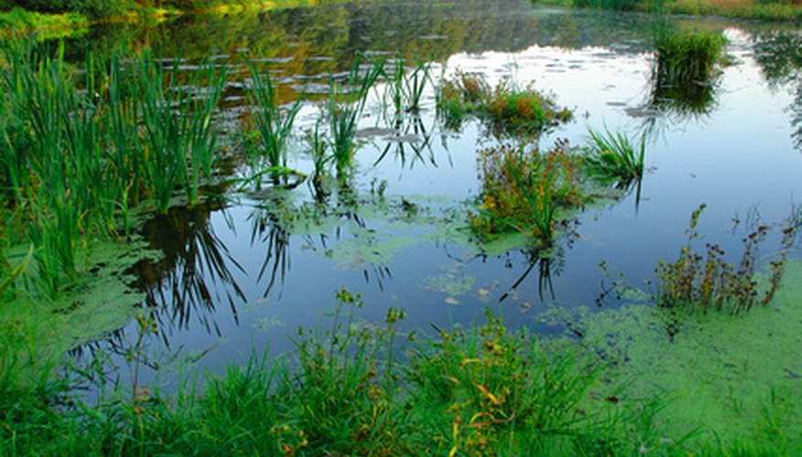 A pond contains many plants favoring different locations.