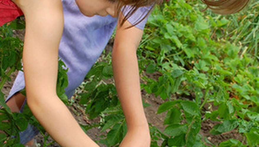 Vegetable gardening is a great way to teach kids about healthy living.