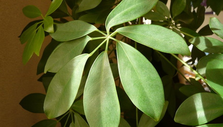 Some leaves are divided into leaflets.