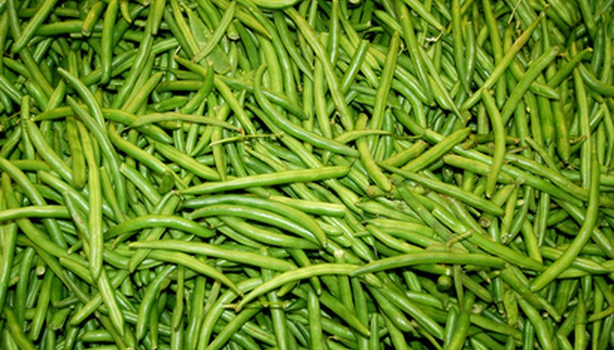 Pole beans are more disease resistant than their bush counterparts.
