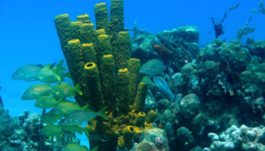 Coral reefs are home to many exotic looking plants.