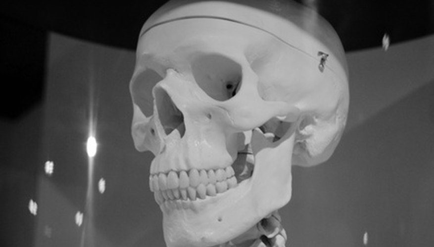 The human skull consists of 22 bones.
