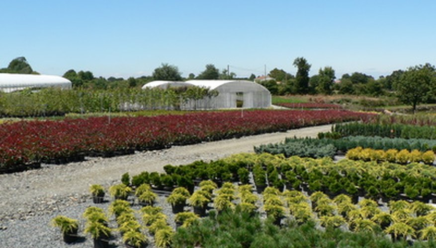 Adequate space and proper irrigation are important components to a successful nursery business.