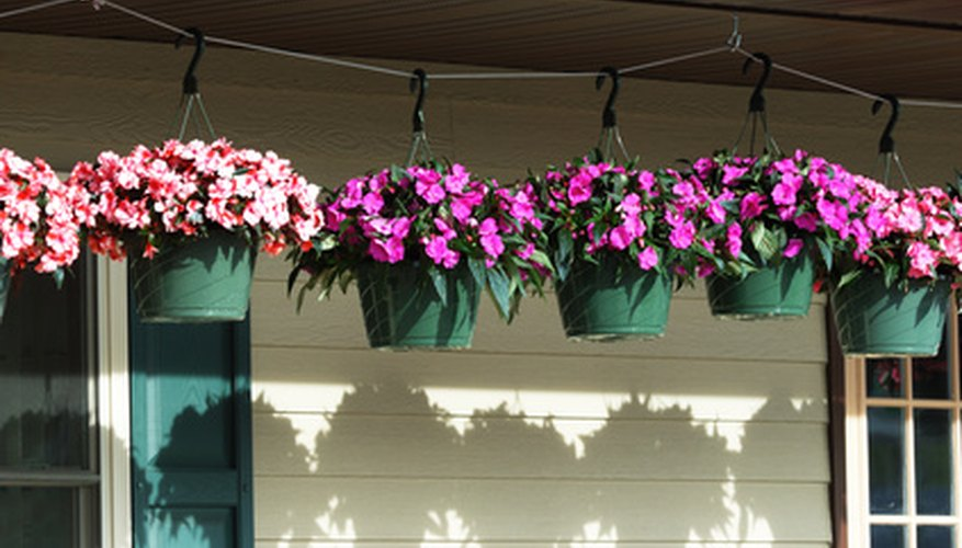 Typical hanging flower pots.