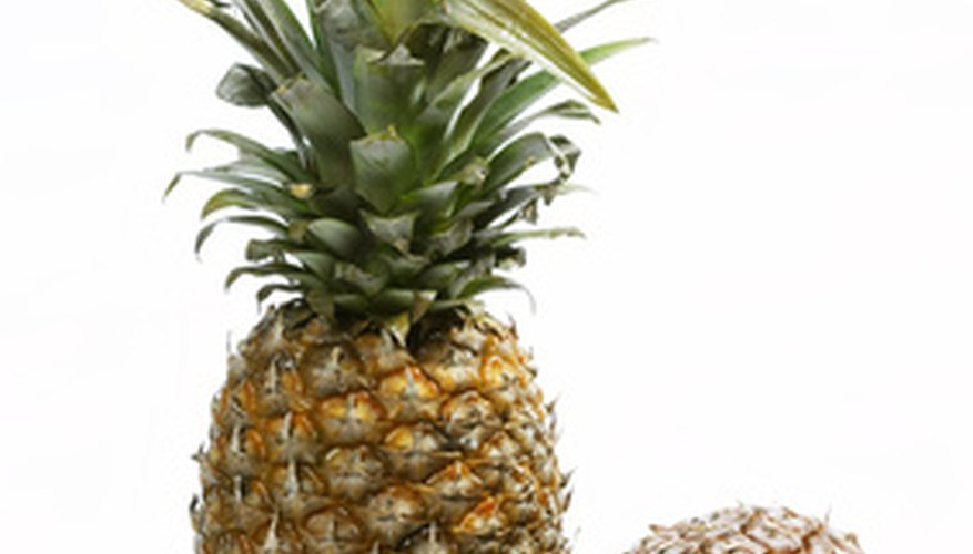 A popular tropical fruit, a pineapple plant can be grown at home.