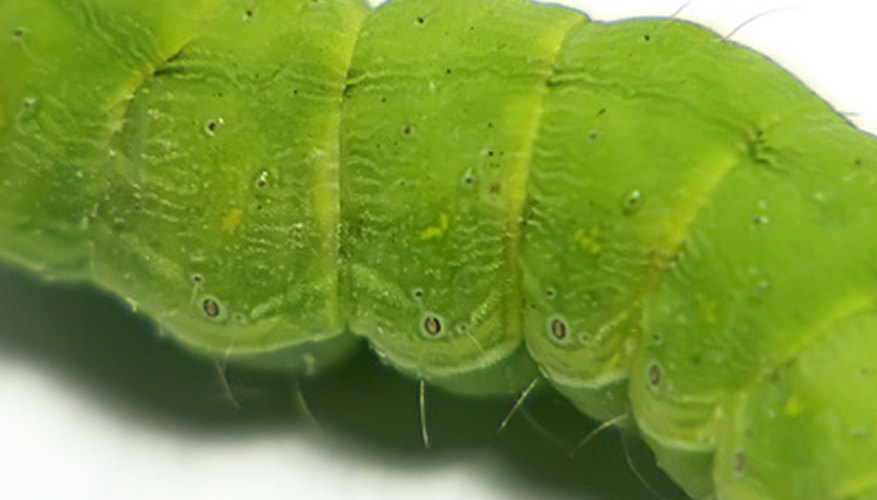 Little green garden worms mean that war has been declared