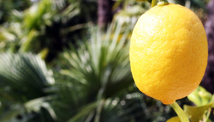 Greece is one of the world's major exporters of lemons.
