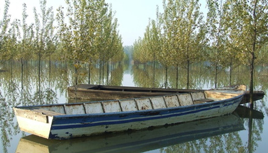 Poplar trees thrive in wet environments.