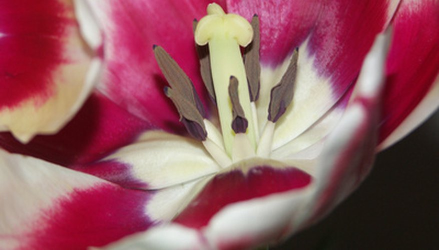 Parts of a flower include the female pistil and male stamen.