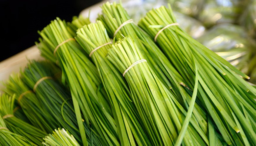Garlic chives are a perennial herb.
