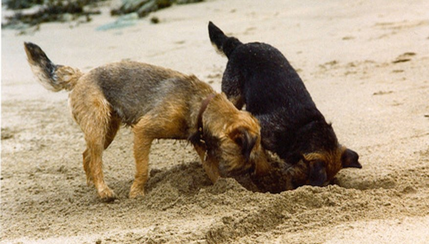 Dogs often dig for entertainment.