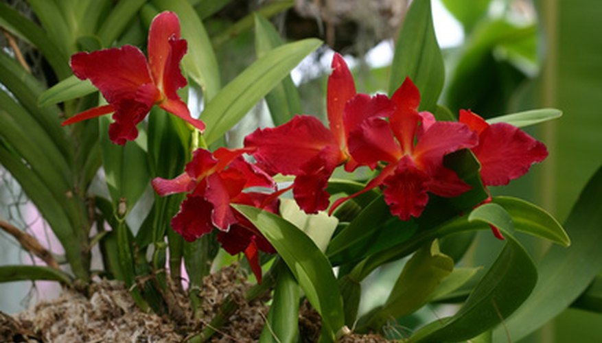Orchids are especially attractive in hanging baskets.