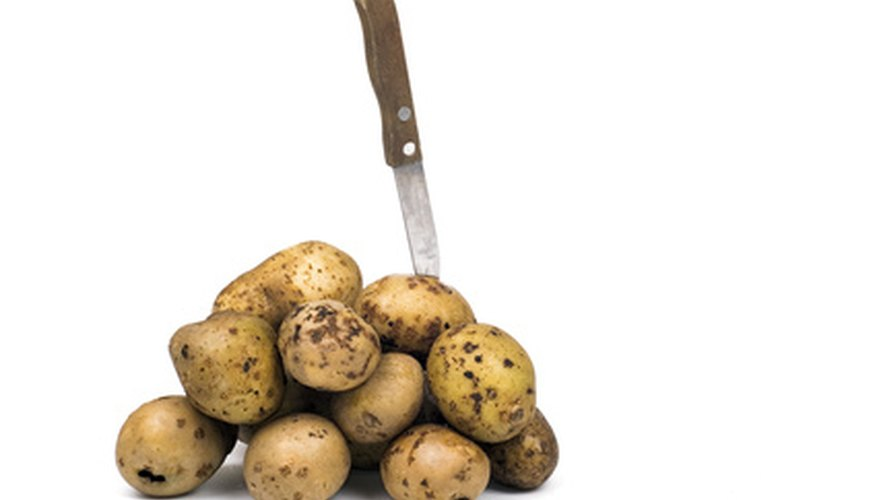 Seed potatoes should be cut before planting only if larger than 3 inches.