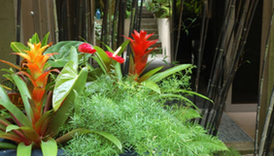 Tropical plants usually have large lush leaves and colorful flowers.