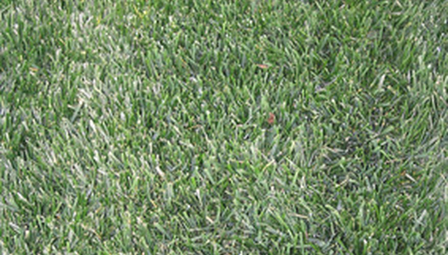 Correctly sodded lawns will quickly grow in thick and lush.