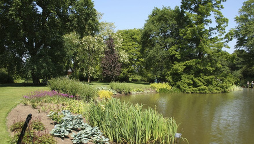 A garden pond provides benefits to nearby vegetable plants.