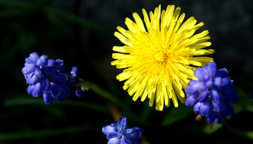 How To Get Rid Of Lawn Weeds With Yellow Flowers Garden Guides