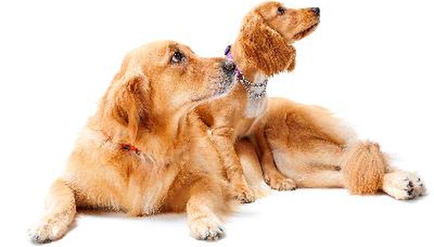 Los perros pueden superar la separación de su compañero con mucho amor y atención.