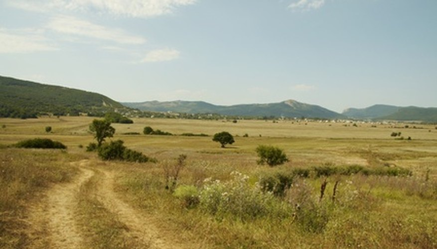 Grasslands are found in dry climates.