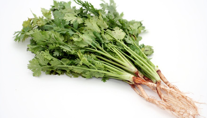Cilantro attracts the bugs you want and keeps out those you don't.