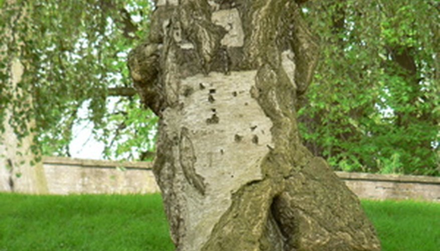 Damage to tree bark signals problems.