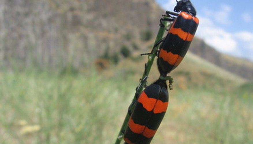 Enseña a los niños acerca de los insectos observándolos en la naturaleza.