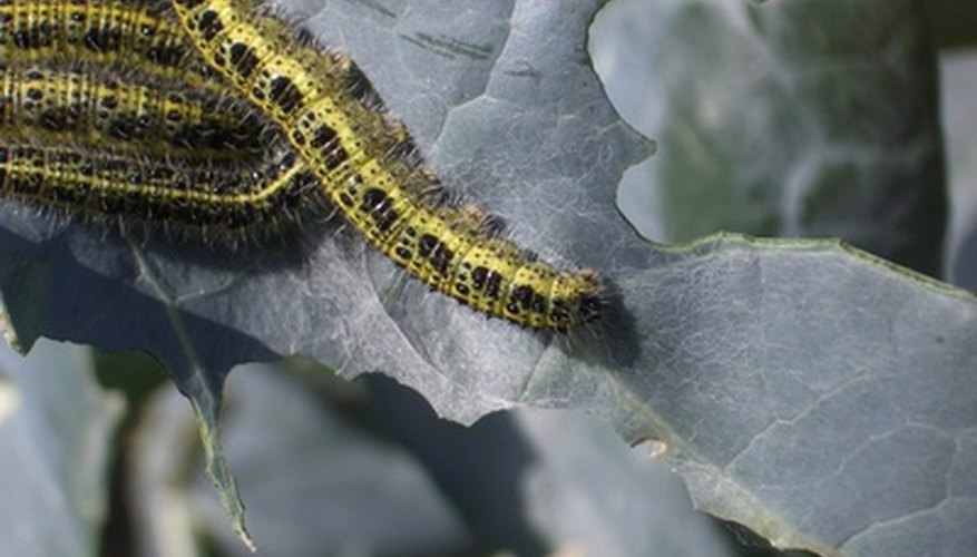 Caterpillars are just one pest that threatens the health of your trees.
