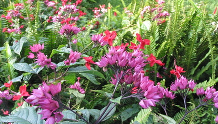 Use plants to brighten shady areas.